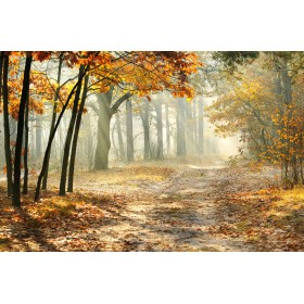 Δάσος - Φθινόπωρο